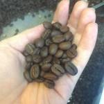 福岡で一番おいしい自家焙煎コーヒー!ポップコーヒー(南区大橋)